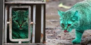 chat vert bulgare