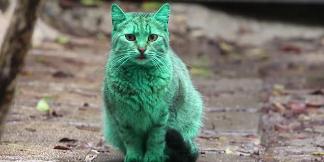 chat vert bulgarie