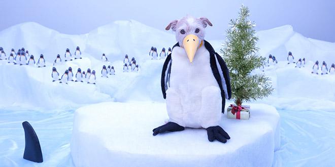 chien pingouin