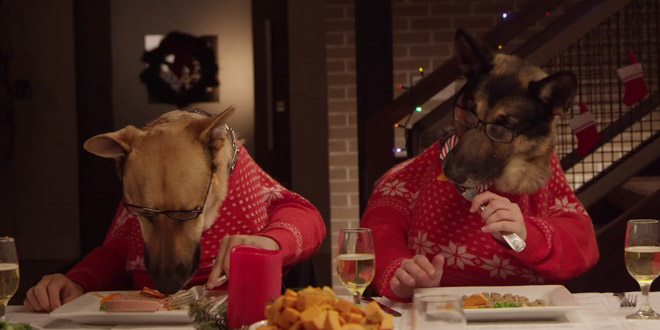 chiens mangent table repas noel