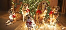 chiens sapins noel decoration