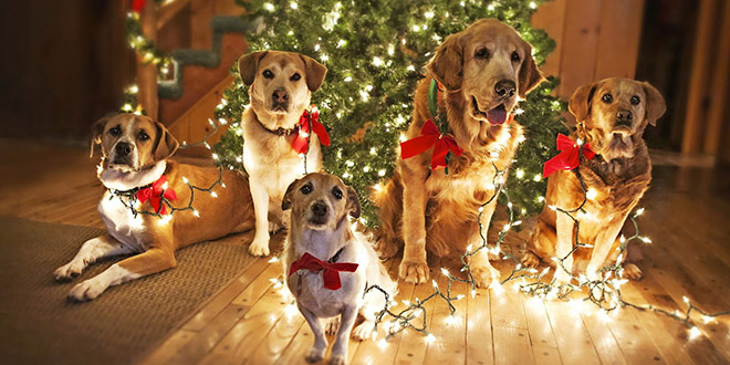 chiens sapins noel decoration