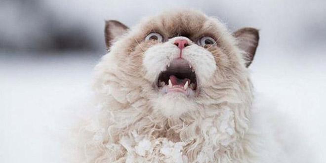 effraye chat neige