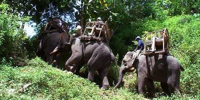 monter sur le dos des elephants