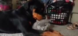 sam aaron amitie chat chien