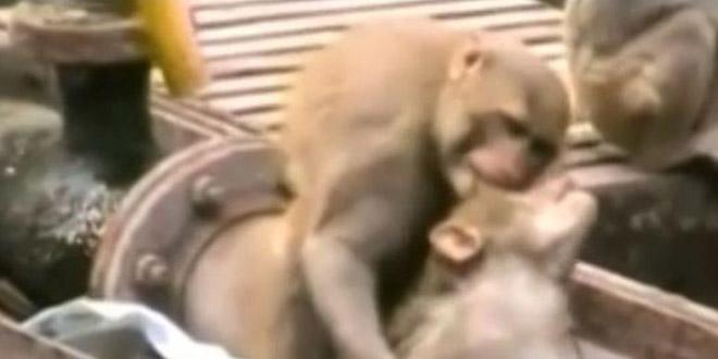 singe sauve singe inde rails gare