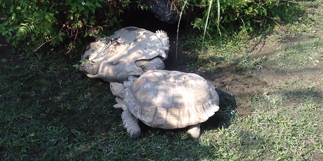 zoo taiwan tortue aide