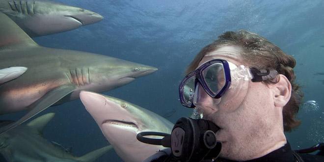 Aaron Gekoski selfie wtf requin