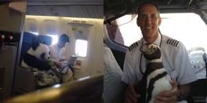 animal in plane