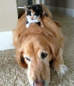 chat-chien-coussin-8