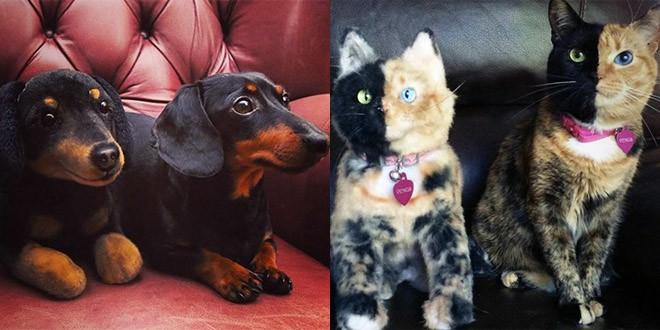 chat chien peluche identique sosie