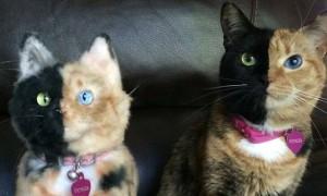 chat couleur sosie peluche