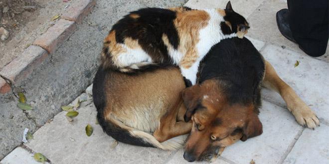 chat dort sur chien1