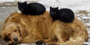 chat dort sur chien10