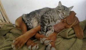 chat dort sur chien15