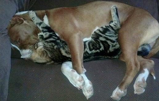 chat dort sur chien2
