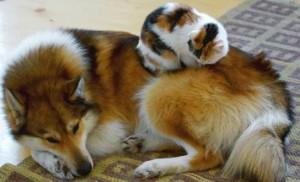 chat dort sur chien4