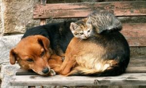 chat dort sur chien5