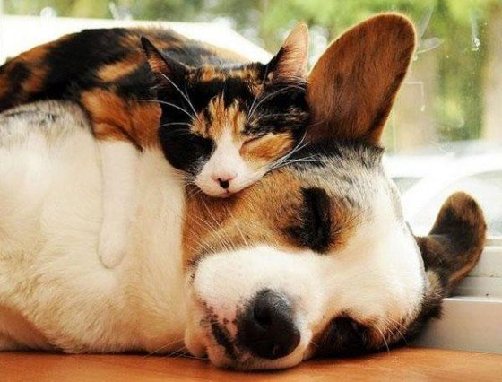 wtf la preuve que les chats ne respectent vraiment pas les chiens. Black Bedroom Furniture Sets. Home Design Ideas