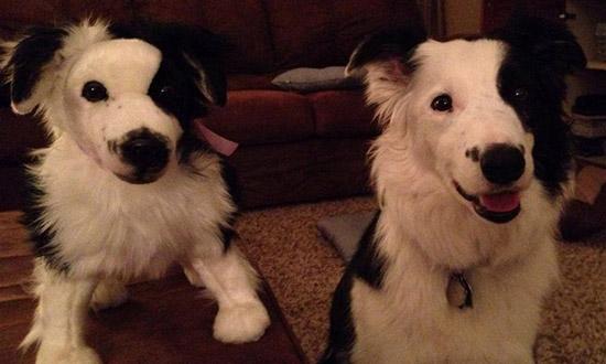 chien blanc peluche sosie