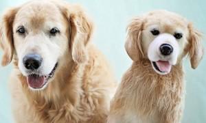 chien peluche reproduire