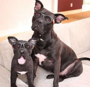 chien sosie lunette peluche