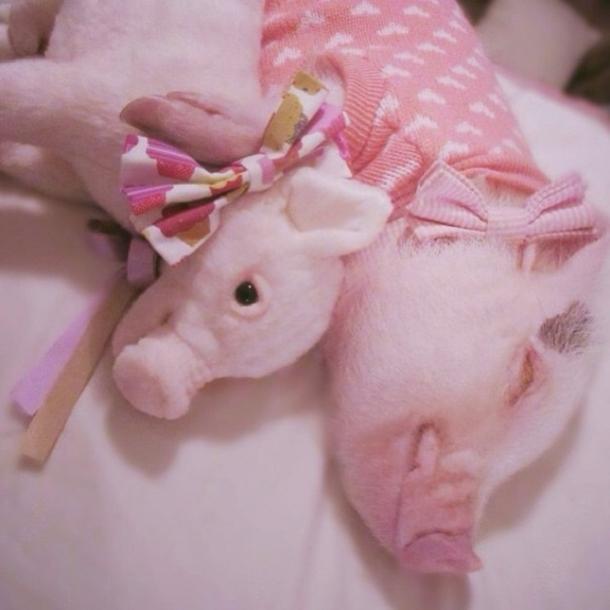 peluche sosie cochon