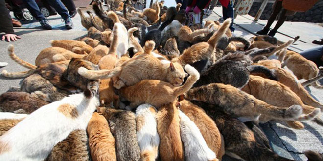 ile aux chats japon