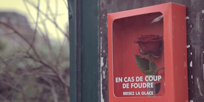 rose brise vitre st valentin