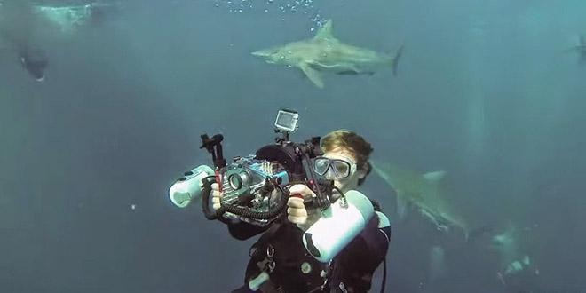 selfie requin afrique du sud