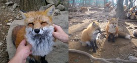 village renard fox japon