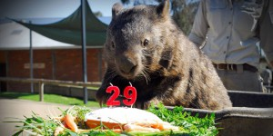 wambat patrick age anniversaire