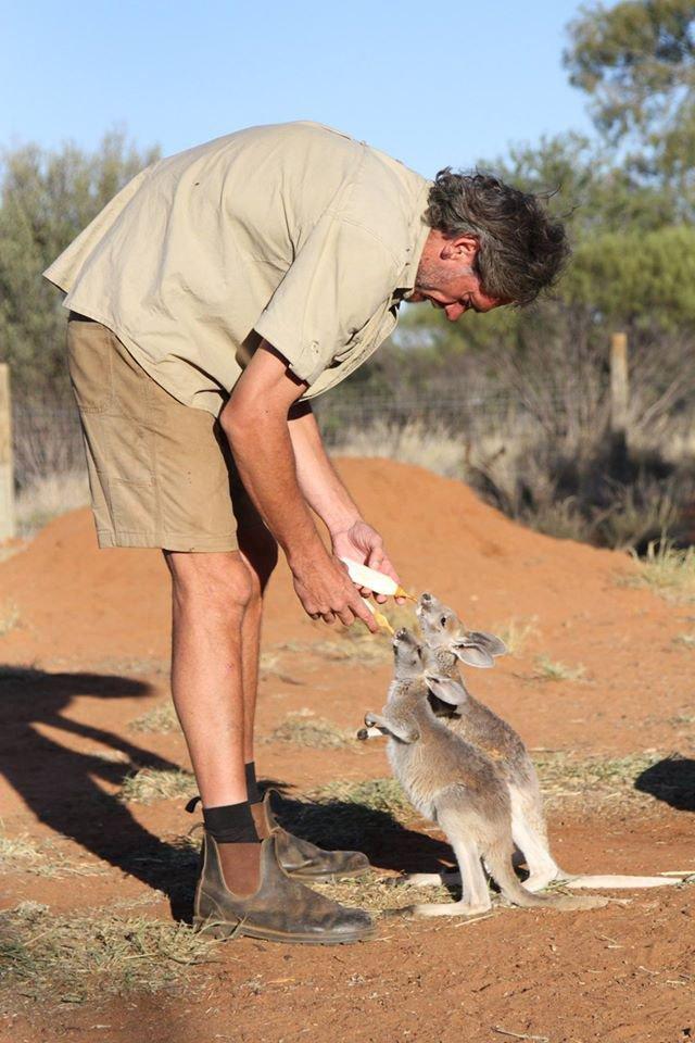 bebe kangourous refuge australie