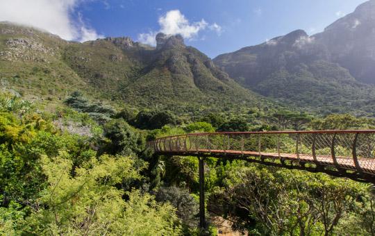 Kirstenbosch jardin botanique afrique du sud