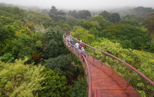 Kirstenbosch jardin botanique arbres