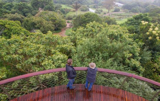 Kirstenbosch jardin botanique cap