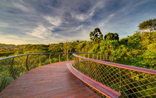 Kirstenbosch jardin botanique chemin