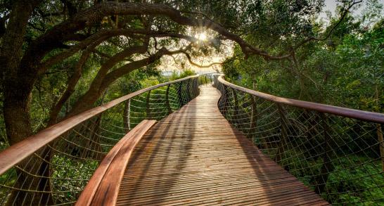 Kirstenbosch jardin botanique
