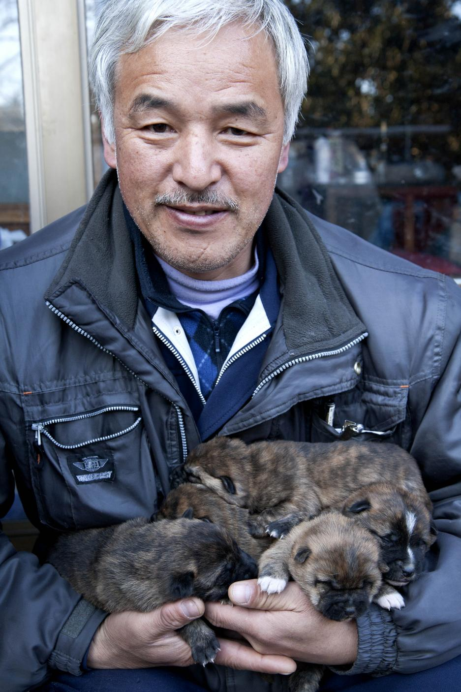 Naoto Matsumura chiens