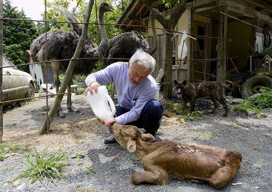 Naoto Matsumura fukushima animaux