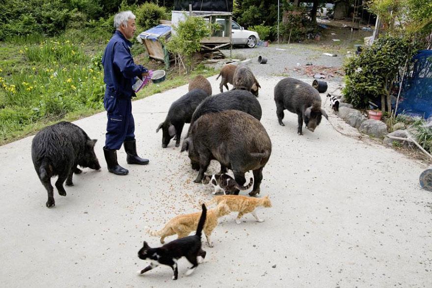 Naoto Matsumura nourrit animaux