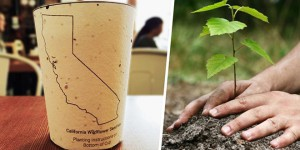 reduce reuse grow plante gobelet biodegradable