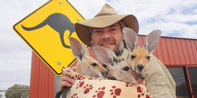 refuge australie bebe kangourous
