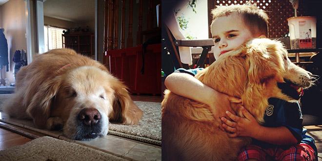 smiley chien aveugle amitie garcon