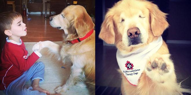 smiley chien aveugle therapie