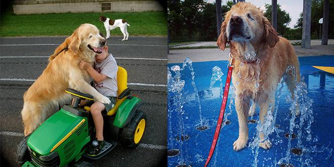 chien sans yeux aveugle smiley