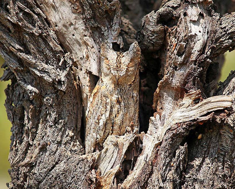 maître du camouflage