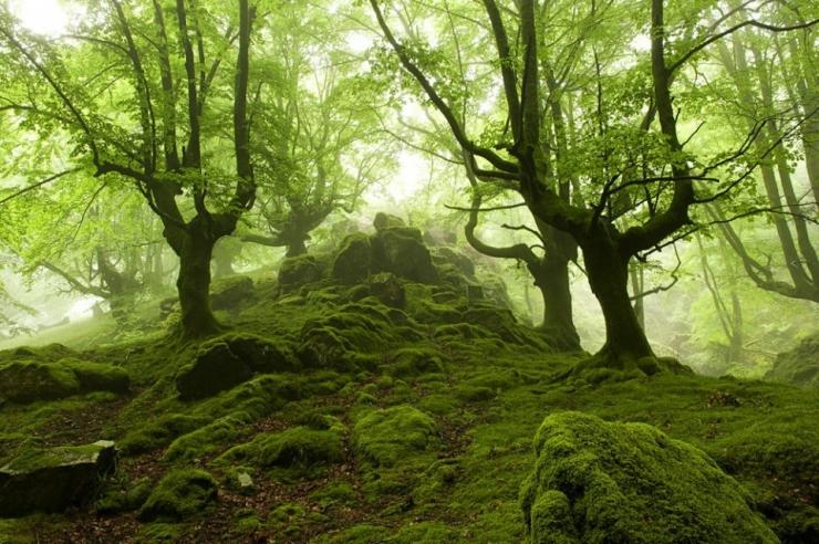 photos-forêt-photographe-Ozkar-zapirain-paysbasque-espagnol