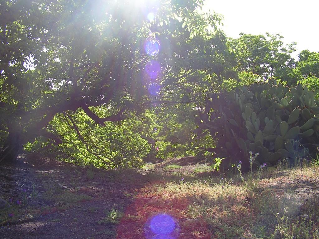 Parc naturel de la Corona Forestal