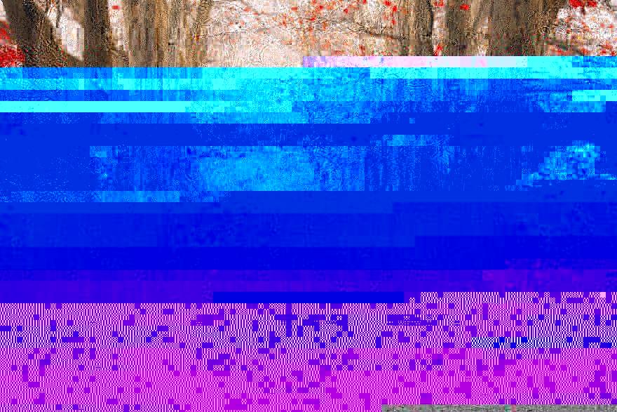 automne-forêt-republique-tchèque-janek-sedlar-jeune-photographe